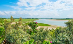 Nature reserve of a tidal inlet at the North Sea coast under a bright blue white cloudy sky in summer, the Zwin, Flanders, Belgium, July 2021