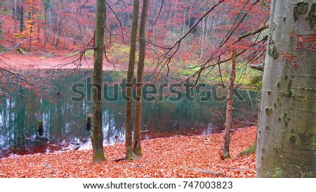 nature reserve of duszatyn lakes in Poland, - Shutterstock ID 747003823