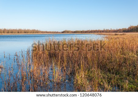 Nature reserve with a natural pond and in the foreground a detailed view at grasses and rushes.