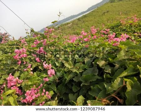 Nature's beauty is best beauty