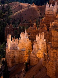 Nature's sand castles; cluster of rock spires illumined by sunlight within Bryce Canyon. Utah, USA