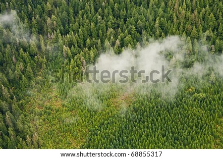 Nature's tree nursery - Tongass National Forest aerial showing regrowth after clear cut logging
