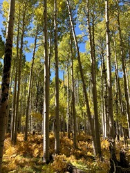 Nature scenes around Flagstaff, Arizona
