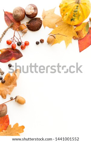 nature, season and botany concept - frame of different dry fallen autumn leaves, chestnuts, acorns and berries on white background #1441001552