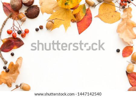nature, season and botany concept - frame of different dry fallen autumn leaves, chestnuts, acorns and berries on white background #1447142540