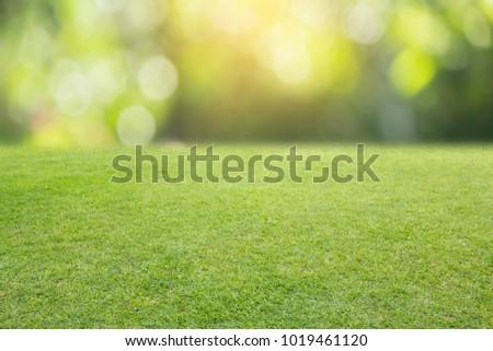 nature spring grass background texture. - Shutterstock ID 1019461120