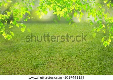 nature spring grass background texture. - Shutterstock ID 1019461123