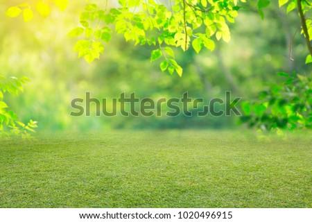 nature spring grass background texture. - Shutterstock ID 1020496915