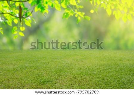 nature spring grass background texture. - Shutterstock ID 795702709