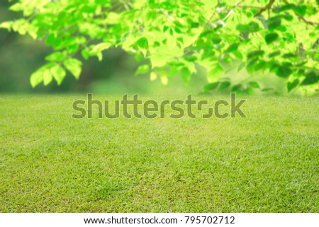 nature spring grass background texture. - Shutterstock ID 795702712