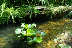 Nature, stream, stones and flowers