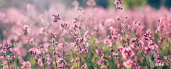 Nature summer background with pink flowers in the meadow at sunny day