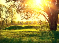 Nature sunset scene. Summer Park. Beautiful field with trees. with Sun Rays. Summertime