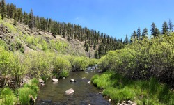 Nature - The Black River in the White Mountains of Arizona.