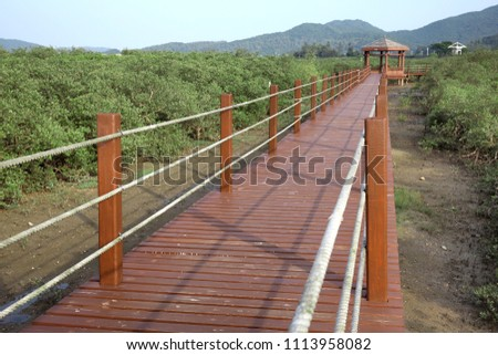 Nature trail in mangrove forest