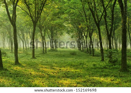nature,tree,flower and landscape