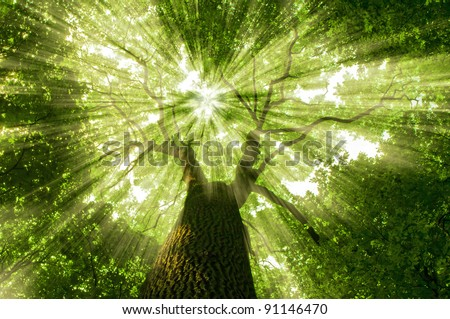 nature. tree in the forest with sunlight