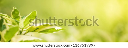 nature view of green leaves under the sun. Natural green tree used as banner background, blur or wallpaper. #1167519997