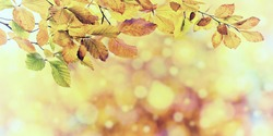 Nature vintage autumn background with golden foliage