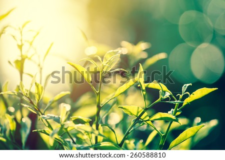 stock photo nature vintage leaves with sunset background 260588810 - Каталог — Фотообои «Природа, пейзаж»
