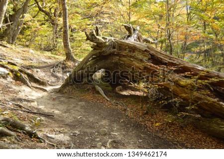 Nature Walks, Nature Speaks