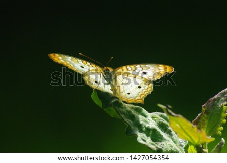 Nature Wildlife Outdoors Natural worldly #1427054354