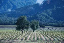 Nature, Wine and freedon