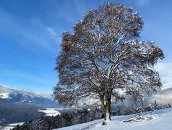 nature winterlandscape tree snow withe
