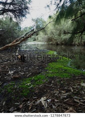 Natures beautiful swamp lands
