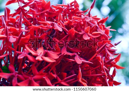 Natures Gorgeous Red flower #1150607060
