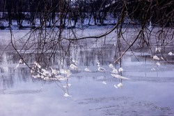 Natures Ice Chimes