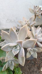 Natureza, Jardim, Plantas, decoração, vida