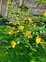 Natureza linda flor da beleza
