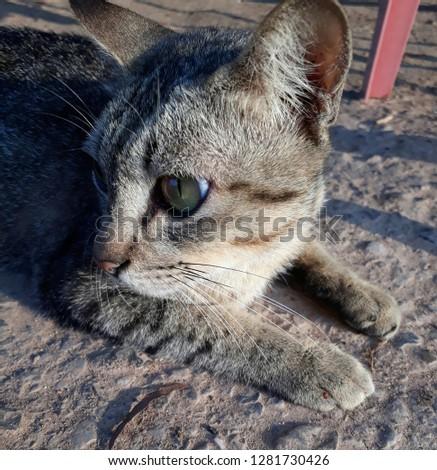 Naughty cat animal