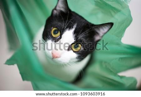 Naughty Cat Green Plastic Bag