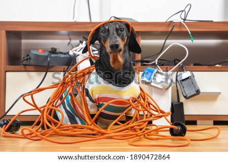 Naughty dachshund was left at home alone and made a mess. Dog in striped t-shirt scattered and tore apart wires and electrical appliances. Stock fotó ©