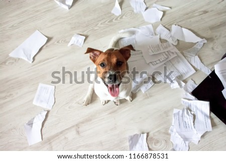Naughty Dog in the Mess. Bad Dog Sitting In Torn Pieces of Documents on the Floor. Pet Tore up Important Documents. Bad dog sitting and looking up on his owner