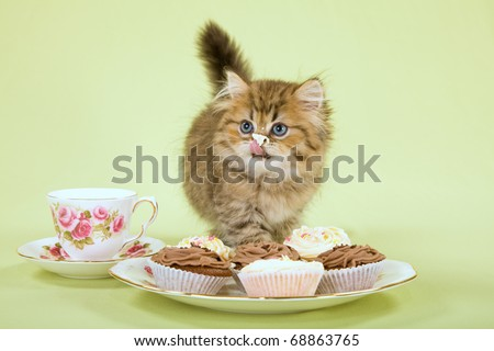 Naughty kitten licking creamy cupcakes