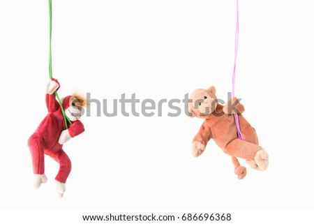 Naughty monkey hung on the green line,Everywhere the monkey is happy ,Couple monkeys hanging on the rope with happy feel