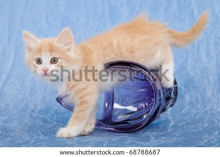 Naughty NFC kitten playing with purple glass vase