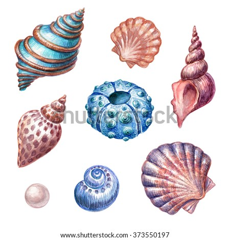 nautical elements, sea life, sea shells, urchin, pearl, watercolor illustration, isolated on white background