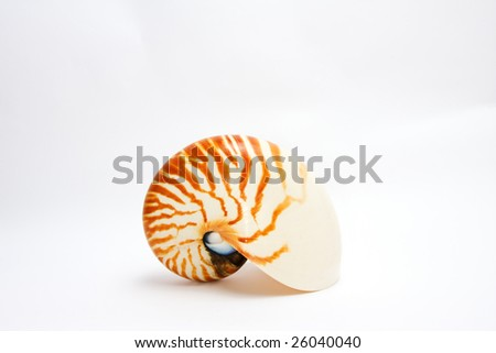 Nautilus Seashell - isolated on white - side view