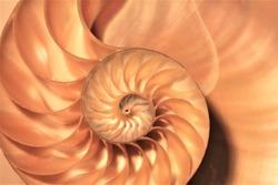 nautilus shell Fibonacci symmetry cross section spiral structure growth golden ratio background mollusk copy space duotone stock, photo, photograph, image, picture