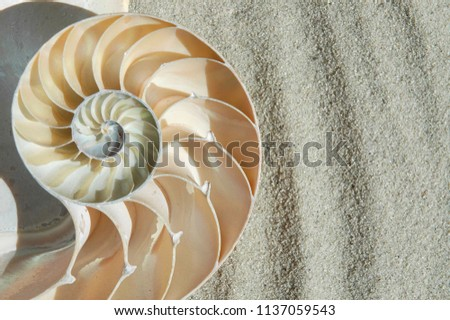 Nautilus shell laying in the sand, room for your text.