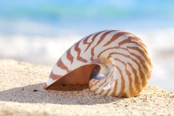 nautilus shell on a beach sand, against sea waves, shallow dof