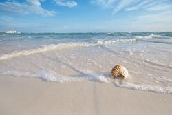 nautilus shell on a sea ocean beach sand with nice curve lens distorshion