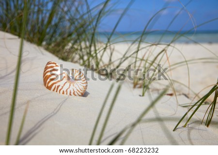 nautilus shell on beach grass  and tropical sea
