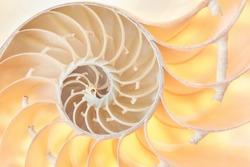 Nautilus shell section, perfect Fibonacci pattern background