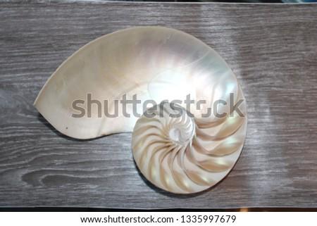 nautilus shell symmetry Fibonacci half cross section spiral golden ratio structure growth close up back lit mother of pearl close up ( pompilius nautilus ) stock, photo, photograph, picture, image,