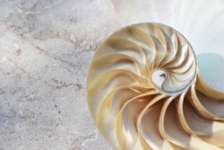 Nautilus shell with copy space concrete stone background cross section symmetry Fibonacci spiral sequence